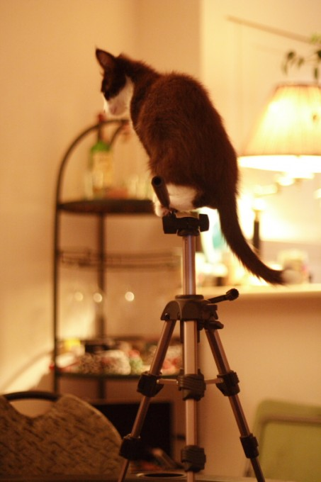 Charlie balances on the tripod